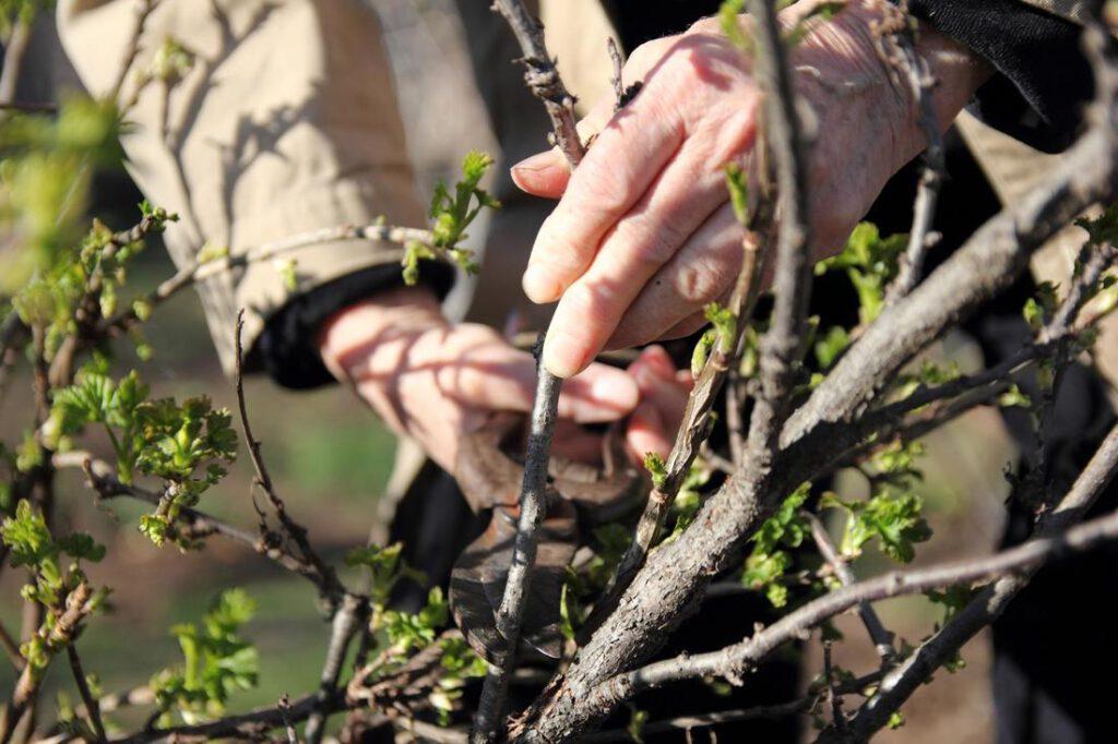 rowlett-tree-service-services_1