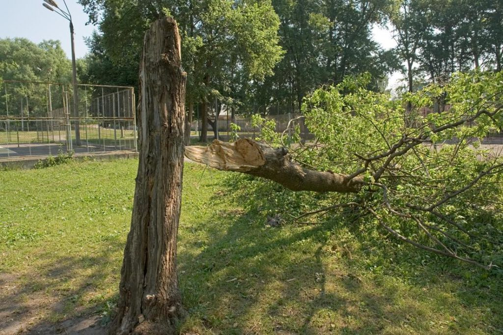 rowlett-tree-service-storm-damage-cleanup-2_2