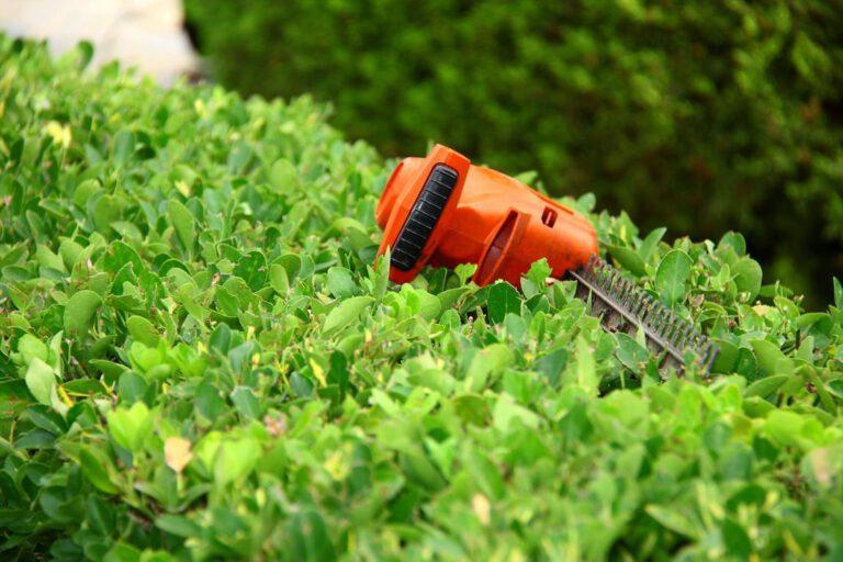 rowlett-tree-service-tree-and-brush-trimming-2_2