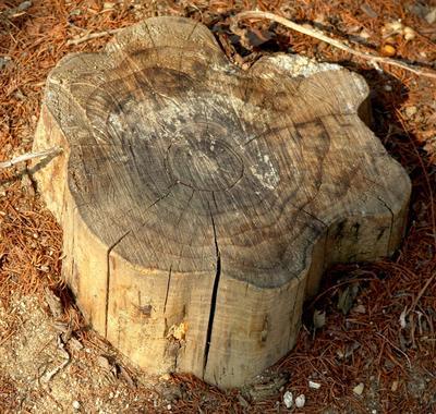 rowlett-tree-service-tree-and-stump-removal-1_1 (1)