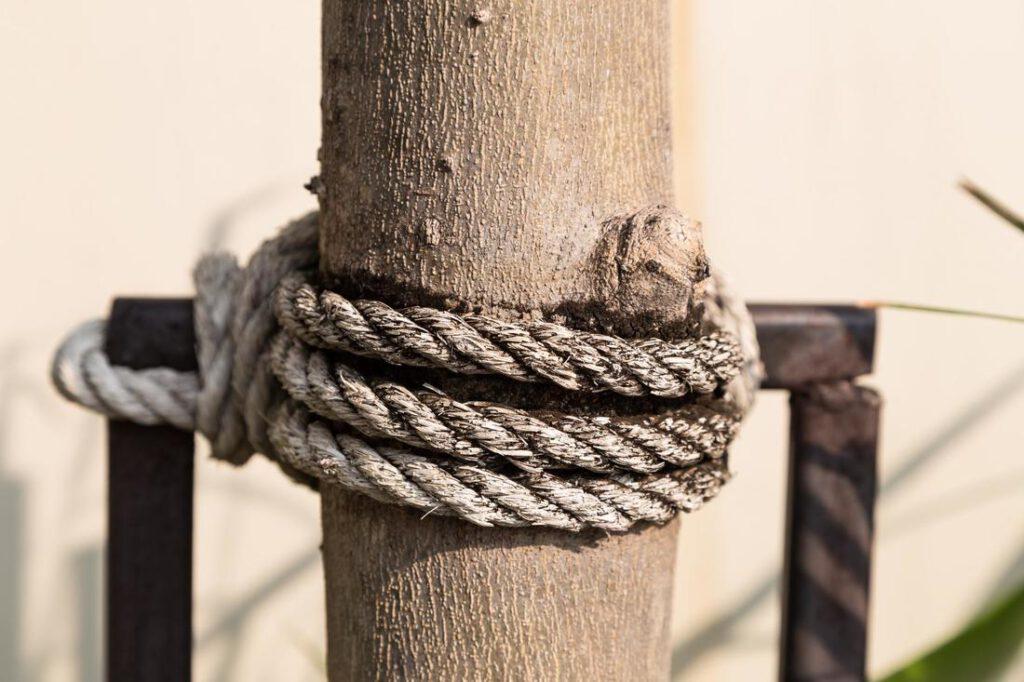 rowlett-tree-service-tree-cabling-and-bracing-1_2